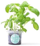 Potted-Gardens-Grow-Your-Own-Branded-Merchandise